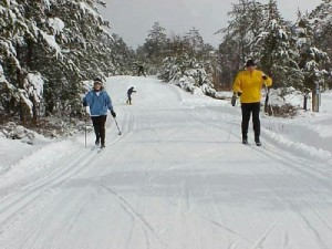 Cross country ski in Michigan.
