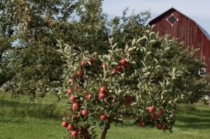 Michigan apple farms