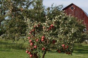 Michigan apple farms