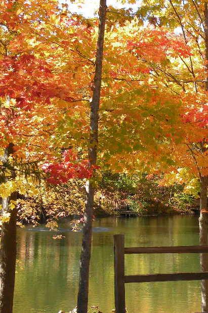 Northern Michigan fall colors.